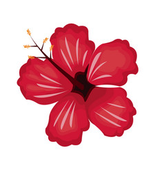 Hibiscus flower exotic nature vector
