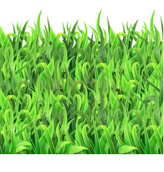 horizontal seamless pattern green grass vector image