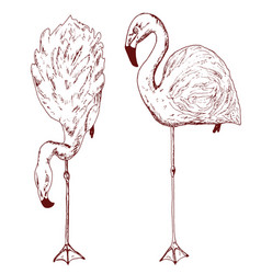 pink flamingo hand drawn birds sketch vector image