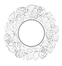 Black circle of fruit hops vector image vector image