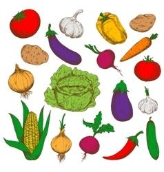 Farm fresh vegetables sketches for farming design vector image