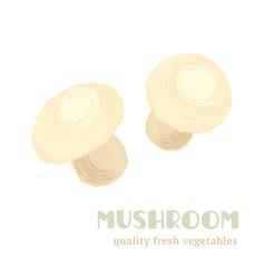fresh mushroom isolated on white background vector image