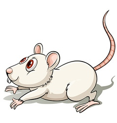 Rat in a jumping position vector
