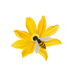 Bee pollinating beautiful flower flying insect vector