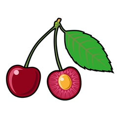Cherry on a white background vector