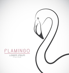 Flamingo design vector