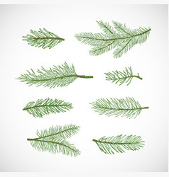 hand drawn winter evergreen spruce or pine vector image