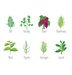 Herb set dill parsley basil mint rosemary vector