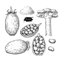 Baobab superfood drawing set isolated hand vector