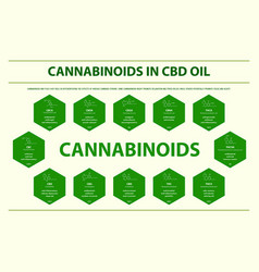 cannabinoids in cbd oil with structural formulas vector image