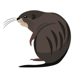 Cartoon muskrat set on isolated white background vector