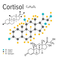 Chemical formula of the cortisol molecule vector