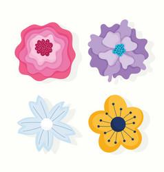 different flowers petals nature decoration vector image