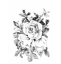 Hand drawn garden rose flower isolated on white vector
