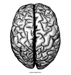 Human cerebrum top view hand draw engraving vector