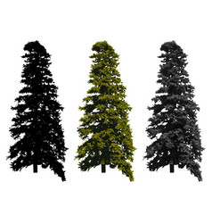 Pine tree isolated on white background vector