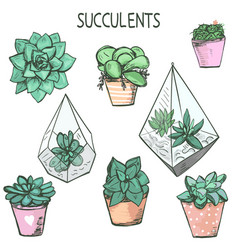 Set cute hand drawn succulent plants in pots vector