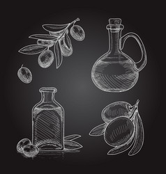 set olive branches with olives and bottles vector image