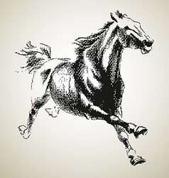 Sketh of horse vector image