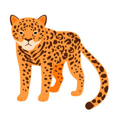 Spotted leopard on a white vector