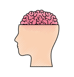 human face silhouette with brain exposed in vector image