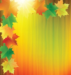 colorful background with the autumn maple leaves vector image