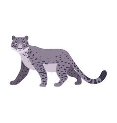 Snow leopard on a white vector