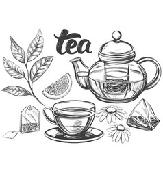 tea set isolated on white background hand drawn vector image
