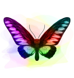 Butterfly Iridescen colours vector image vector image