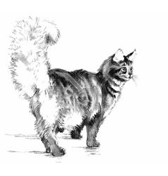 Cat portrait Hand drawn vector image vector image