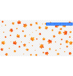 Autumn falling leaves on transparent background vector