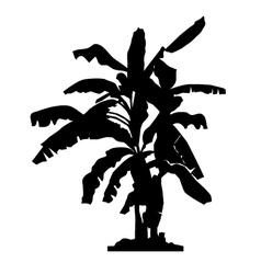 banana tree silhouette vector image