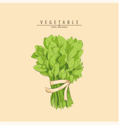 Bunch of spinach vector