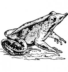 frog rhinodermatinae vector image