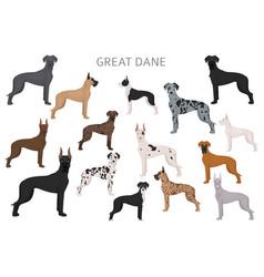Great dane different variaties coat color dog vector