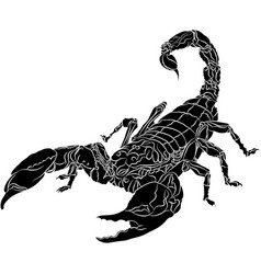 scorpion isolated on white background vector image