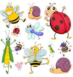 A group of insects vector image vector image