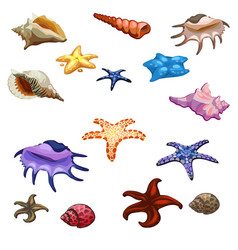 Different colored mollusks shells and starfish vector
