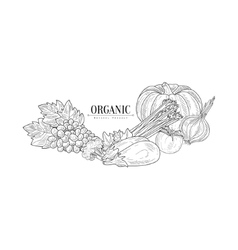 Fresh Eco Vegetables Hand Drawn Realistic Sketch vector image