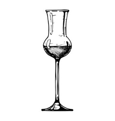 Grappa glass vector