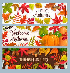 hello autumn banners with falling leaves vector image