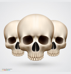 human tree skulls isolated on white vector image