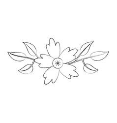 aster flower natural petal leaves decoration vector image