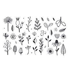 Herbal tea and floral doodle set 3 vector