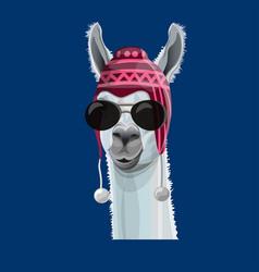 Portrait of llama in a hat vector