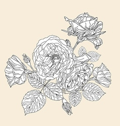 hand drawn decorative roses vector image vector image