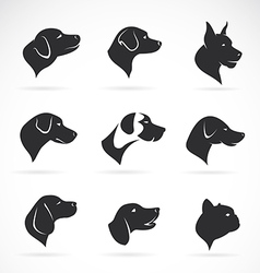 image of an dog head vector image