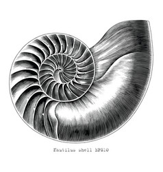 antique engraving nautilus shell hand draw vector image
