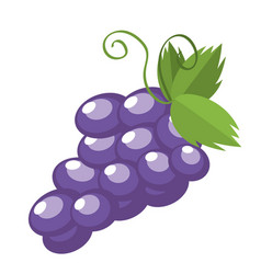 Grapes fruit isolated vector