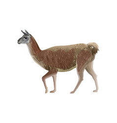 Walking llama vector